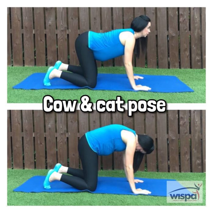 Cow and Cat Pose